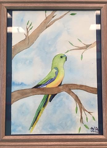 """""""Orange Bellied Parrot"""" by Kristen Porter"""